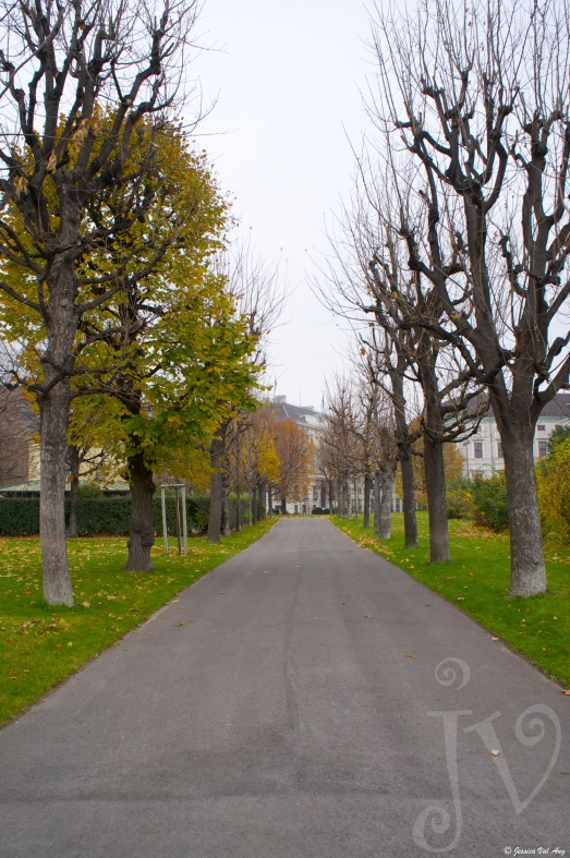 Tree-lined avenue.